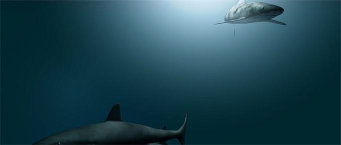 死里逃生!澳男子遇鲨鱼袭击 一开始以为是海豚幸好潜水服穿得厚