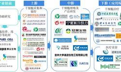 预见2019:《中国<em>干细胞</em><em>医疗</em>产业全景图谱》(附规模、发展现状、竞争、趋势等)