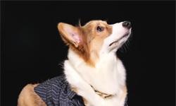 2019年中国宠物行业市场现状及发展趋势分析 宠物兴起带动细分市场多样化发展