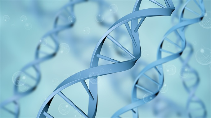 """无意之举还是有意为之?研究发现基因编辑双胞胎的智力或""""赢在起跑线上"""""""