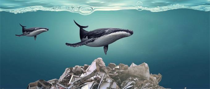 加州提议到2030年逐步淘汰一次性塑料 投资塑料回收生产商迎来福音