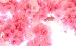 2018年中国花卉行业发展概况及趋势分析 区域专业化布局,科技种花深入人心