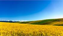 我国农业产业化联合体概念及发展前景