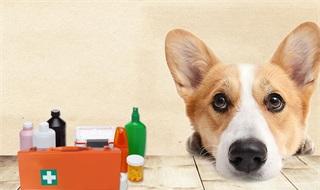 2019年中国宠物医疗行业市场现状及发展趋势分析 人才缺口短板亟待解决促进发展