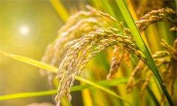 2019年中国农业产业市场分析:大数据技术催生精准农业,科技领域应用前景广阔