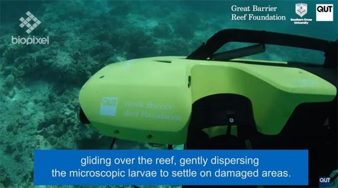 水下无人机重建大堡礁 计划精准送达数百万只幼虫