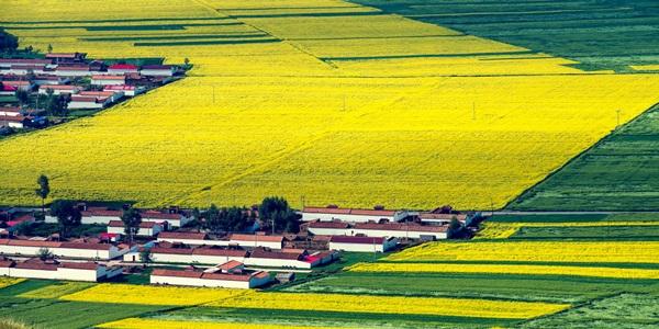 农业产业化联合体