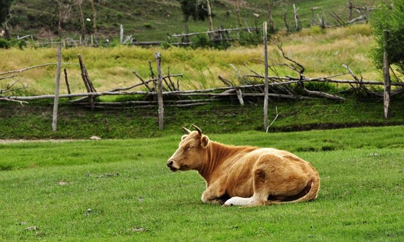 玉屏县生态肉牛养殖及深加工项目