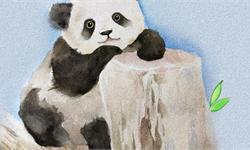 """2019年全球首只圈养大熊猫幼仔出生 叫声洪亮看来是个""""大姐大"""""""
