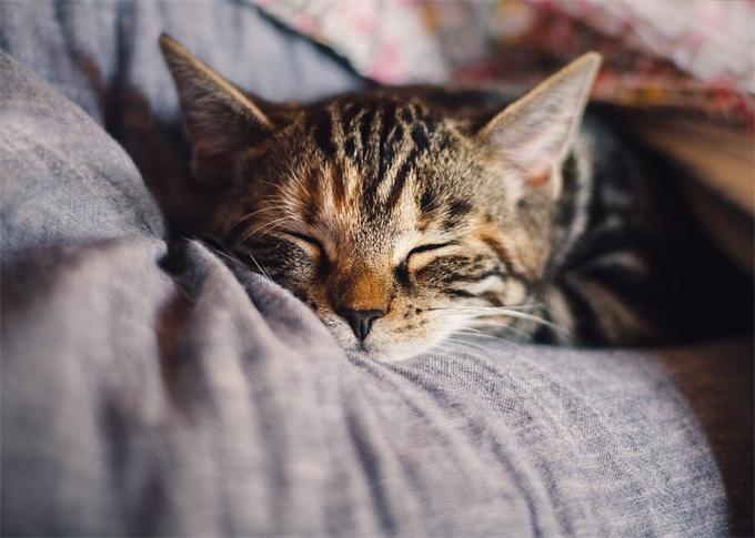 """好的睡眠,是最棒的""""保健品""""与""""聪明药""""——助眠、睡眠监测APP排行榜"""