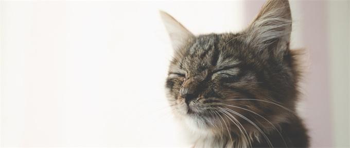 世界首例装有四只仿生爪猫咪正学习走路 高科技为动物设计假肢