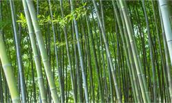 痛心!4A<em>景区</em>竹子被刻字难恢复 2010年刻痕仍然清晰可见