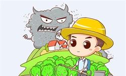 """2019年中国化肥行业市场现状及发展趋势分析 """"一带一路""""战略推动市场需求量大增"""