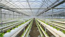 高科技农业是未来农业发展的趋势吗?