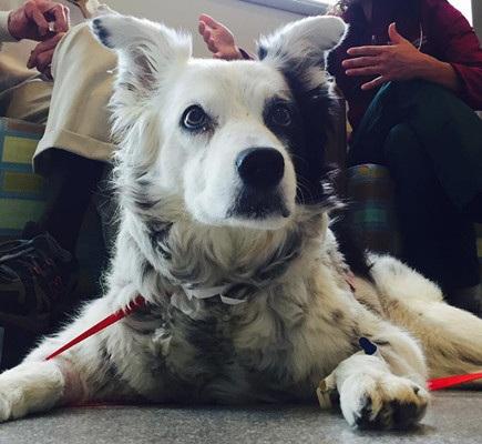 最聪明狗狗去世