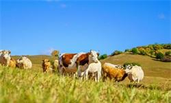 2018年中国<em>畜牧业</em>市场现状及发展新葡萄京娱乐场手机版 农业现代化推动总产值将保持稳定提升