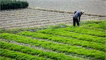 """湖南首批10个特色农业小镇都有啥""""特色""""?"""