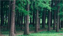 森林康养基地建设条件及如何落地?