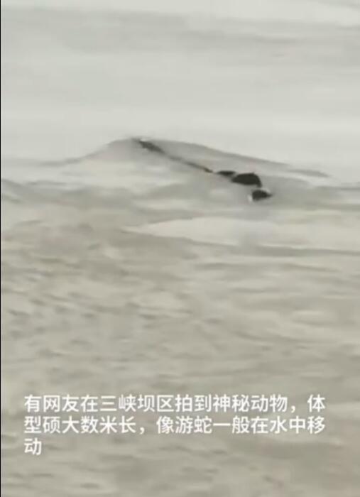 三峡坝区神秘动物