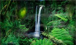 大火之后,亚马逊森林可能需要几千年才能恢复!