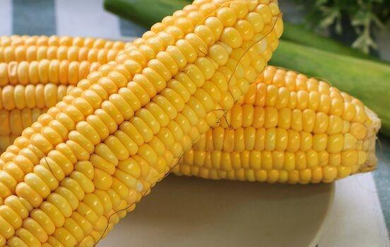 我国科学家成功克隆抗纹枯病基因 为玉米、水稻抗病育种提供有效途径