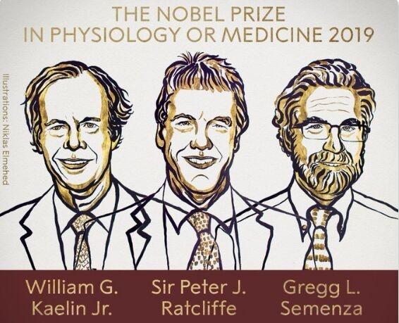 重磅!2019年诺贝尔生理学和医学奖揭晓 表彰3位科学家对氧气的研究