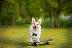 宠物食品制造商乖宝宠物食品获5亿元融资