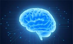 """如果实验室培育的""""微型大脑""""产生意识,它们算不算生命?"""