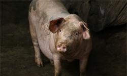 从养猪谈到素质教育 | 李志刚聊创投