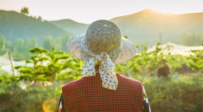 王晓芳:怎么判断好吃的水果?百果园给出3个标准,收获营养和健康