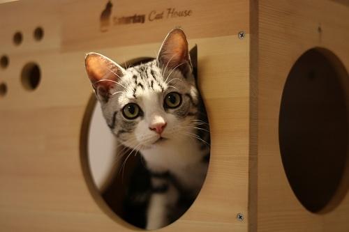 """""""薛定谔的猫""""有了新答案?日本物理学家称可让猫""""死而复生"""""""