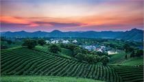家庭农场如何发展及应该如何定位?