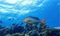拖网捕鱼禁令效果显著!绿色和平组织呼吁联合国对更多海洋进行保护