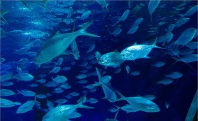 长江无鱼之困:未来或将无鱼可吃