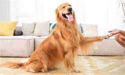 "IEEE论文:中国研究人员用""巴甫洛夫的狗""调教人工智能有了新方法"