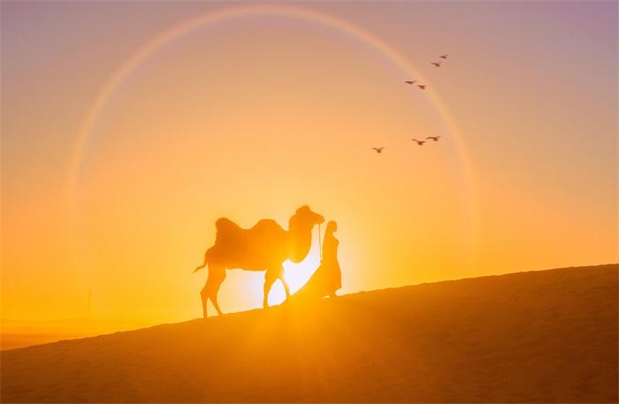 历史复活!沙特发现距今12万年前的人类脚印 还有骆驼、大象等足迹分布周围