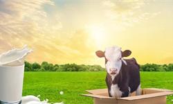 2019年中国乳制品行业市场分析:产量规模趋于稳定 行业现代化进程取得长足进步