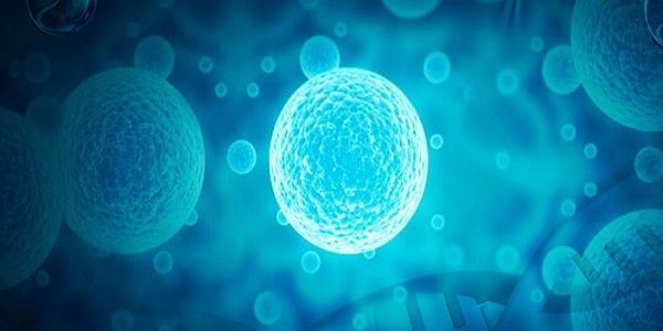 被忽视的危险!研究称耐受细菌产生耐药性的速度是正常细菌的三倍