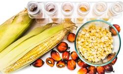 2019年全球棕榈油行业发展现状分析 应用前景广阔