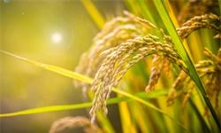 2019年中国粮食物流行业市场现状及发展新葡萄京娱乐场手机版 粮食物流总量将呈现上升趋势
