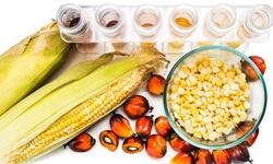2019年全球棕榈油行业市场现状及发展前景分析 未来工业用途将成为主要消费市场