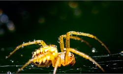 """山火过后,澳大利亚即将迎来一场致命毒蜘蛛""""盛宴"""""""