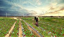 2020年拿到休闲农业项目补贴的小窍门