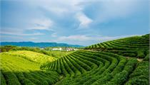 乡村振兴的四大途径及案例分享