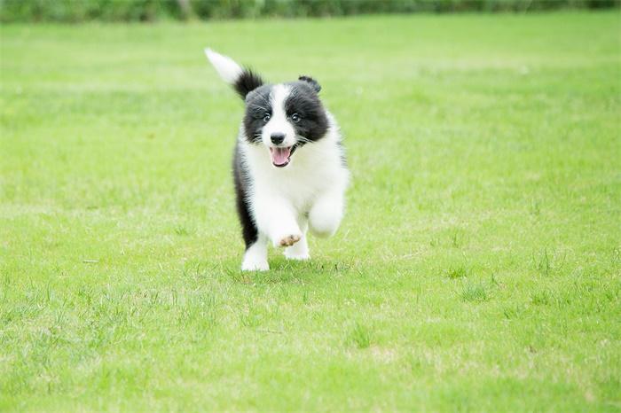 全球第二例!香港又发现一只宠物狗感染新冠病毒,首例确诊狗已死亡