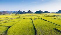 田园综合体总体规划纲领 坚持四大原则五大理念