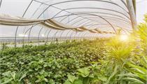 国家<em>现代农业</em><em>产业园</em>类型如何划分?