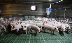 2020年中国<em>生猪</em><em>养殖</em>行业市场分析:多家企业销售收入大幅增长 猪价下跌空间有限