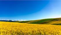 2020年农业补贴的四个重点产业项目