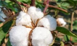 2020年中国棉花行业市场现状及发展新葡萄京娱乐场手机版 新疆有望成为植保<em>无人机</em>最大应用市场